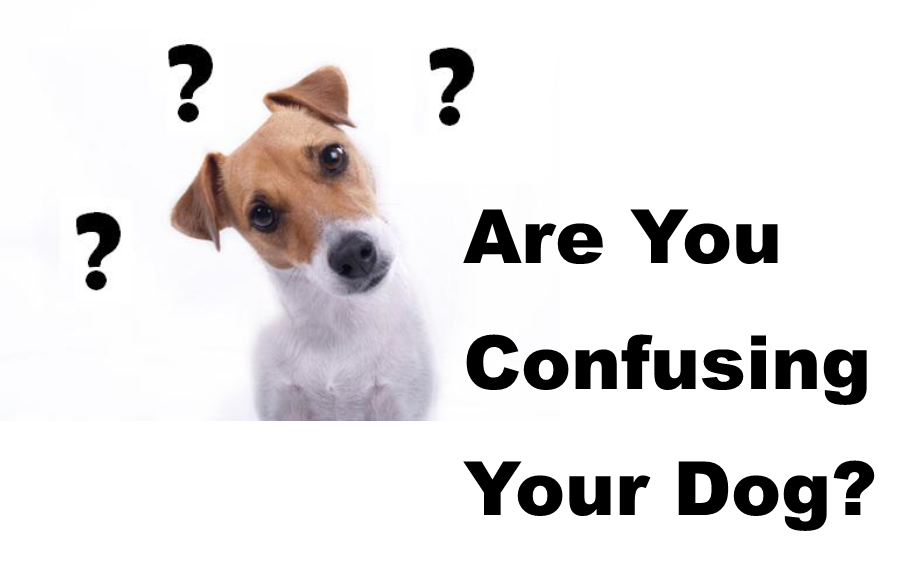 Are You Confusing Your Dog
