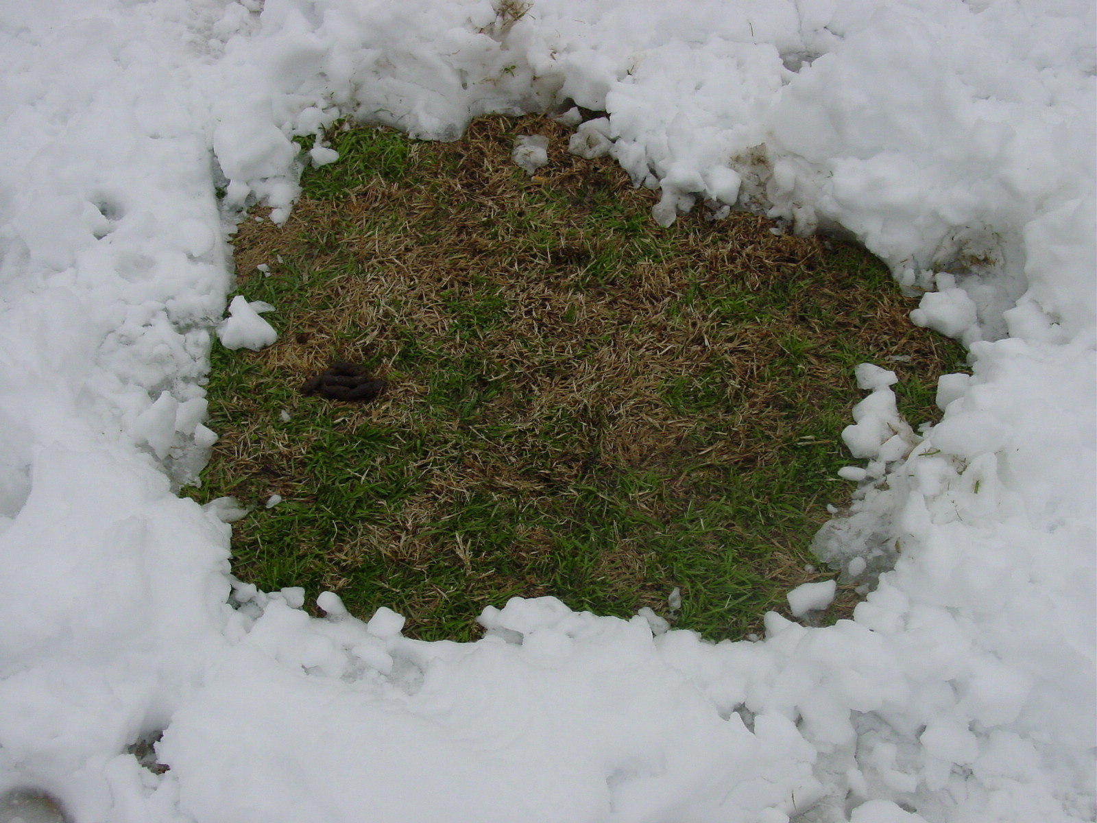 27-5561. Potty hole in the snow.