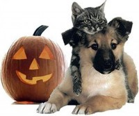 Halloween Dog and Cat