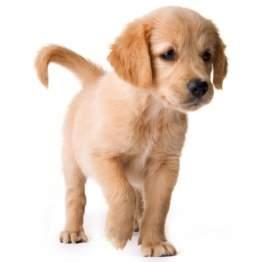 puppy_potty_train